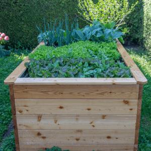Raised bed for vegetable gardening